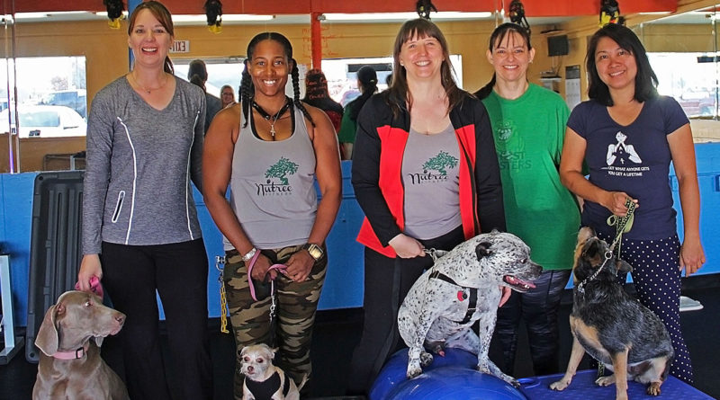 Get fit with your canine buddy